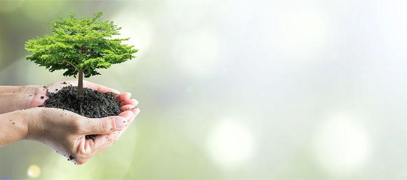 Více zelených stromů kolem nás
